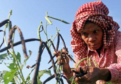 COVID-19: Desenvolvimento Humano deve retroceder no mundo pela primeira vez desde 1990