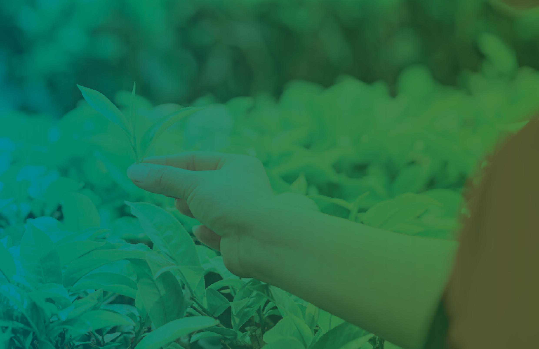 SAÚDE, AGROTÓXICOS E AGROECOLOGIA – Aberta a chamada para o número especial da revista Saúde em Debate