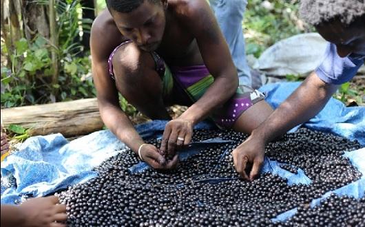 Territórios Sustentáveis e Saudáveis: Fiocruz transforma OTSS em  programa permanente